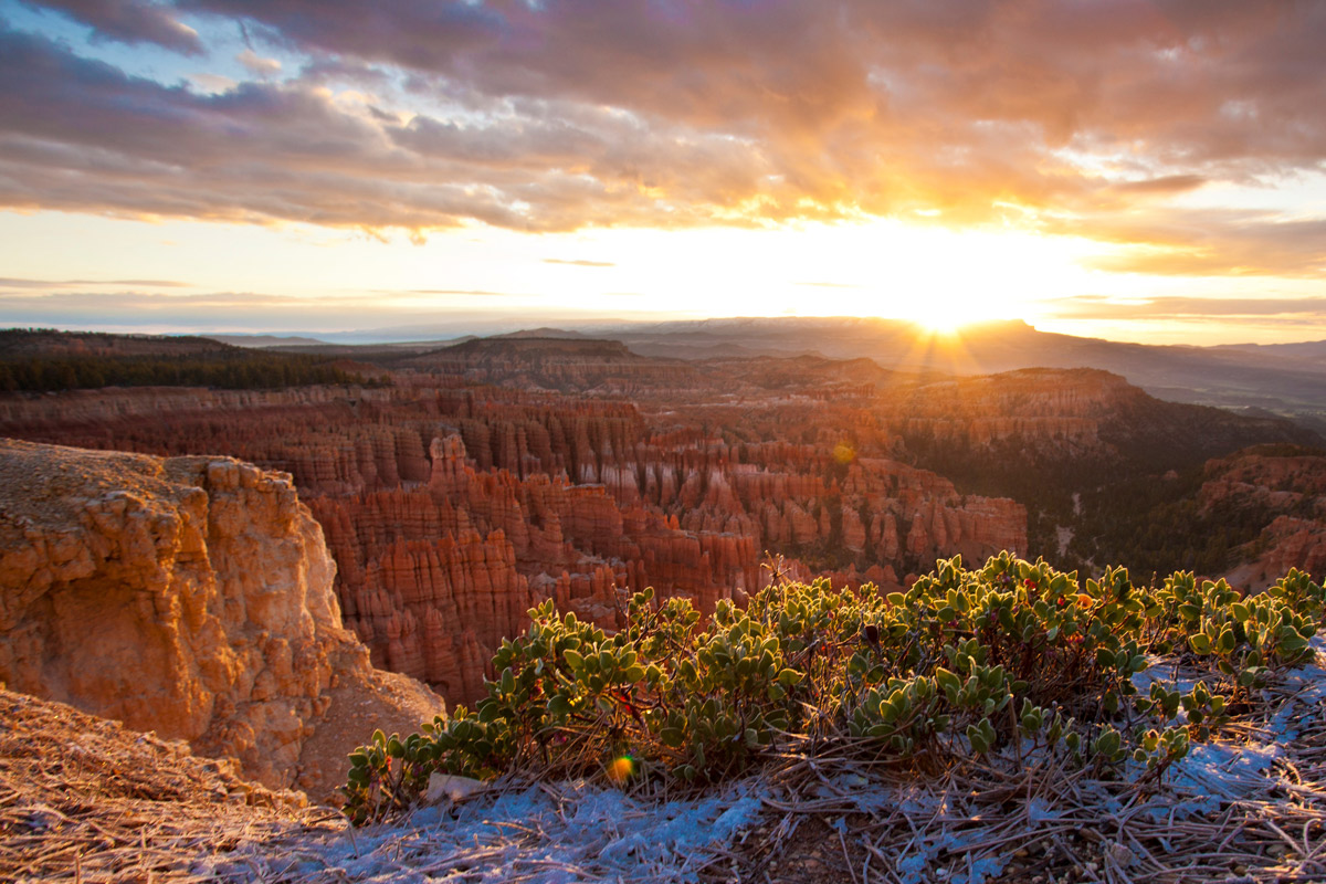 Bryce-Canyon-manzanita-bush