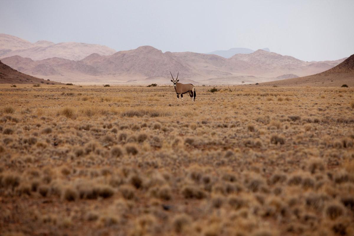 Namibian-desert