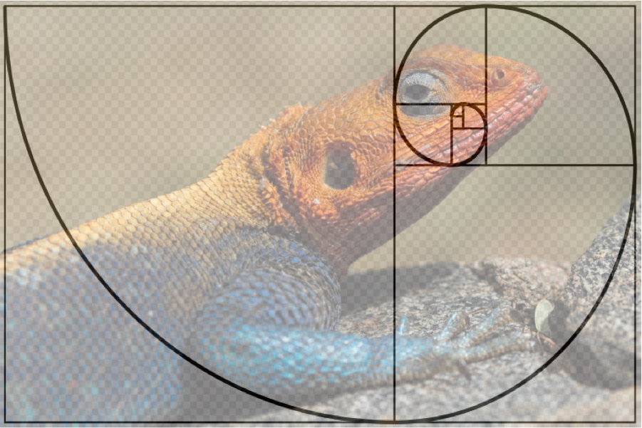 lizard photo composition golden ratio