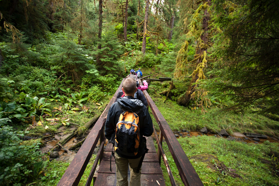 Wide-Angle Hiking Trail Forest