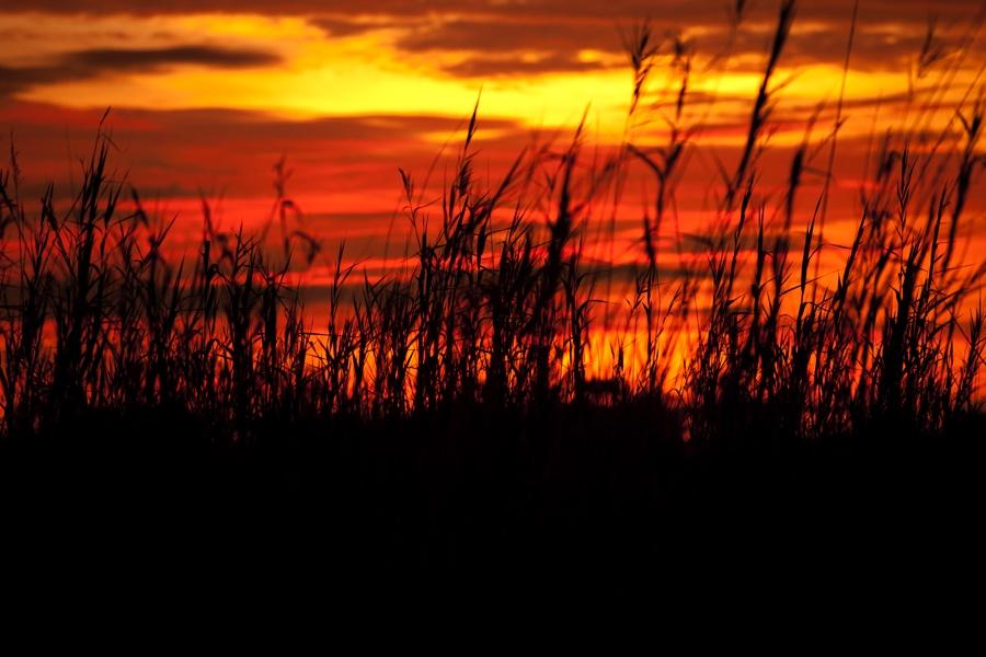Bright orange Botswana sunset with grass