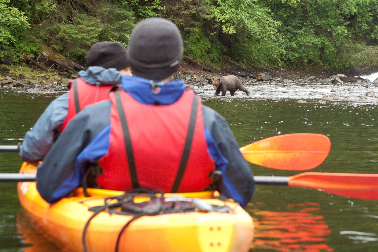 inside passage, brown bears, kayaking