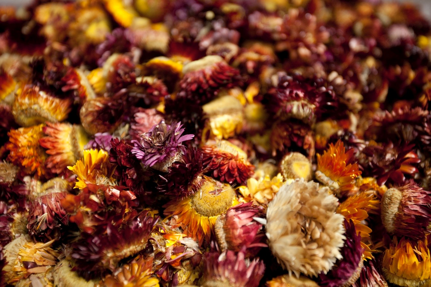 dried flowers in Jiuzhaigou