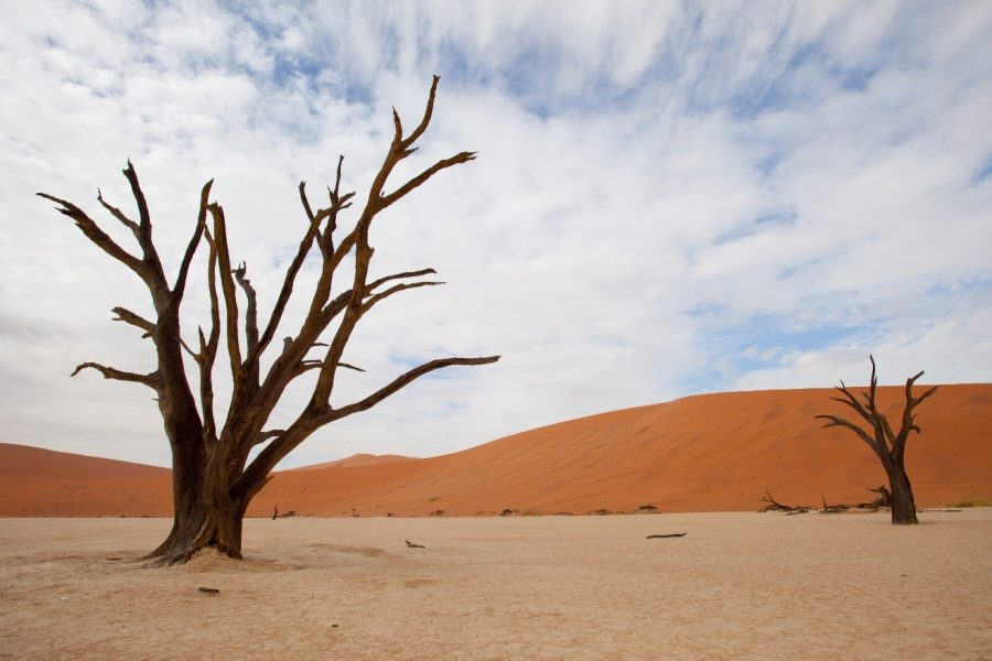 two trees framed in the salt pan of sossusvlei with a whispy blue sky