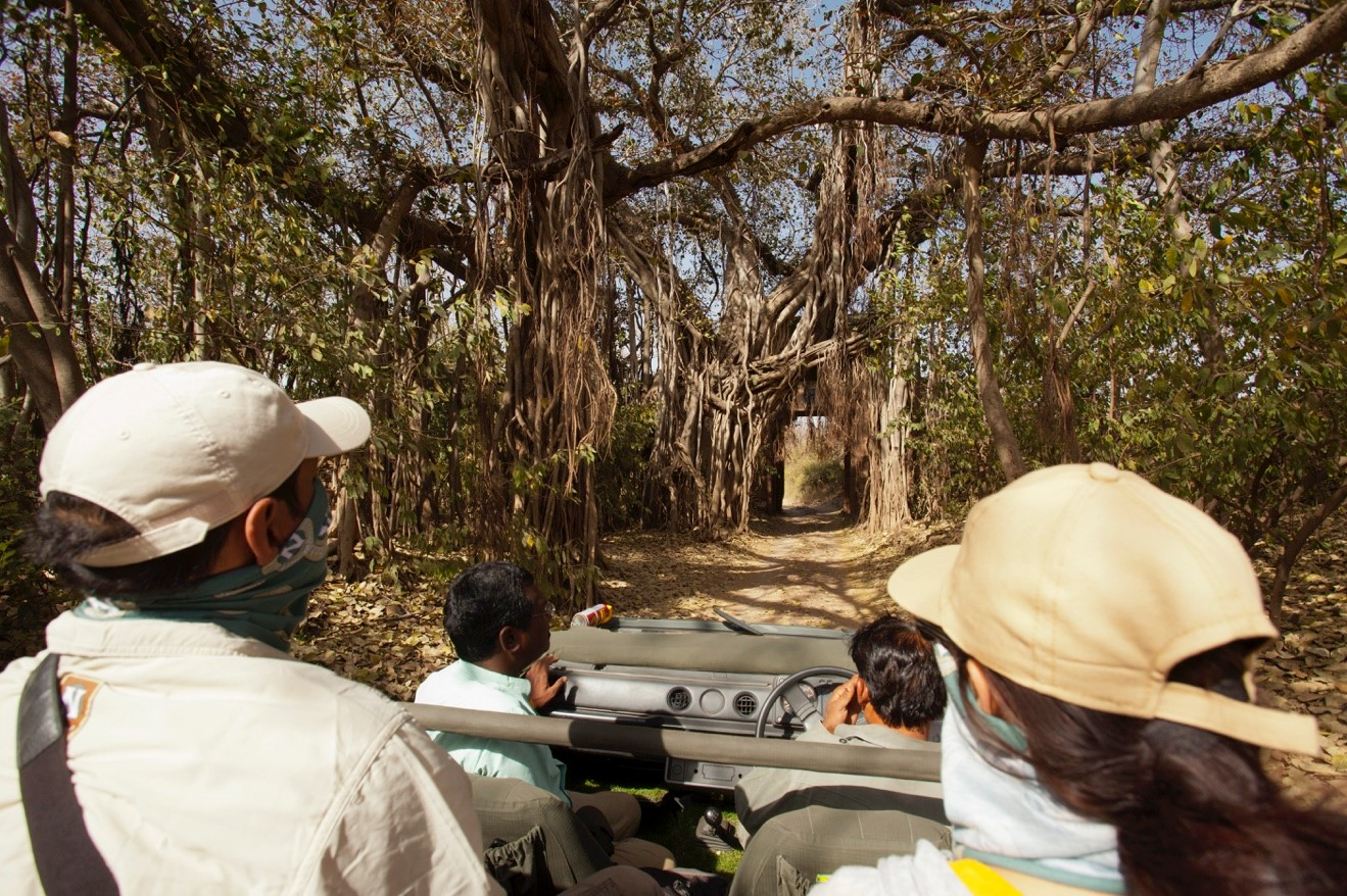 travelers in jeep exploring ranthambore national park