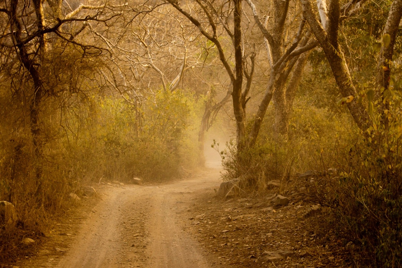 golden light making the game drive in ranthambore extra special