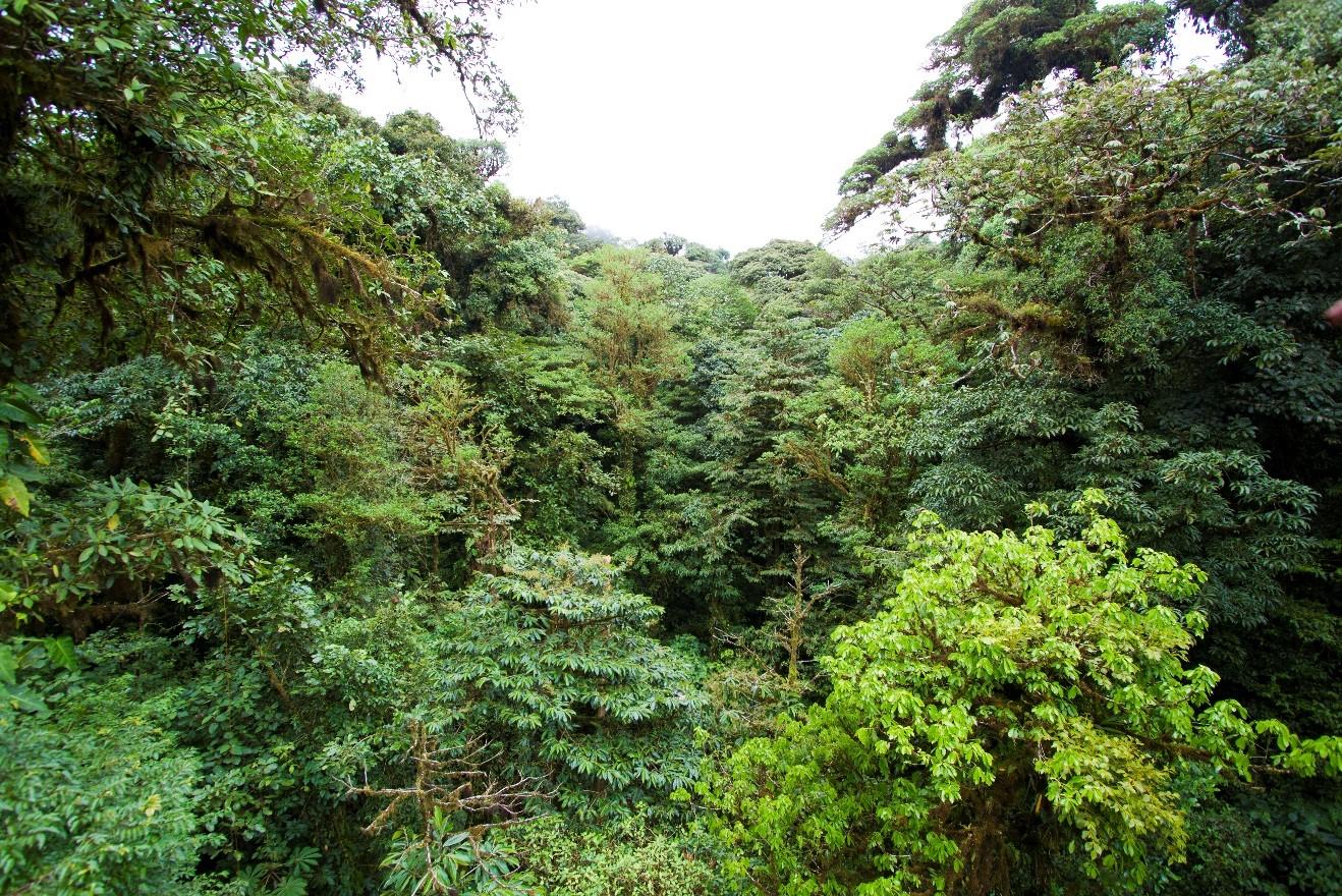 the lush jungle of costa rica