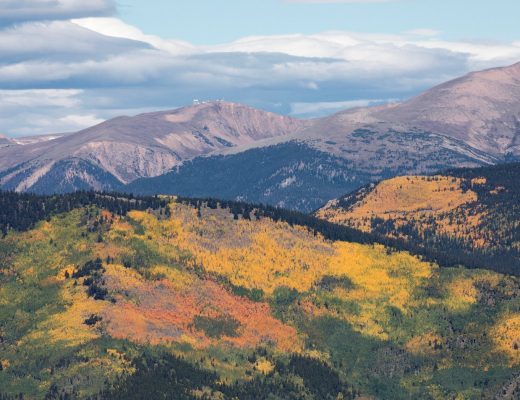 fall foliage taken from Mt. Evans in Colorado showing orange, yellow, and green leaves