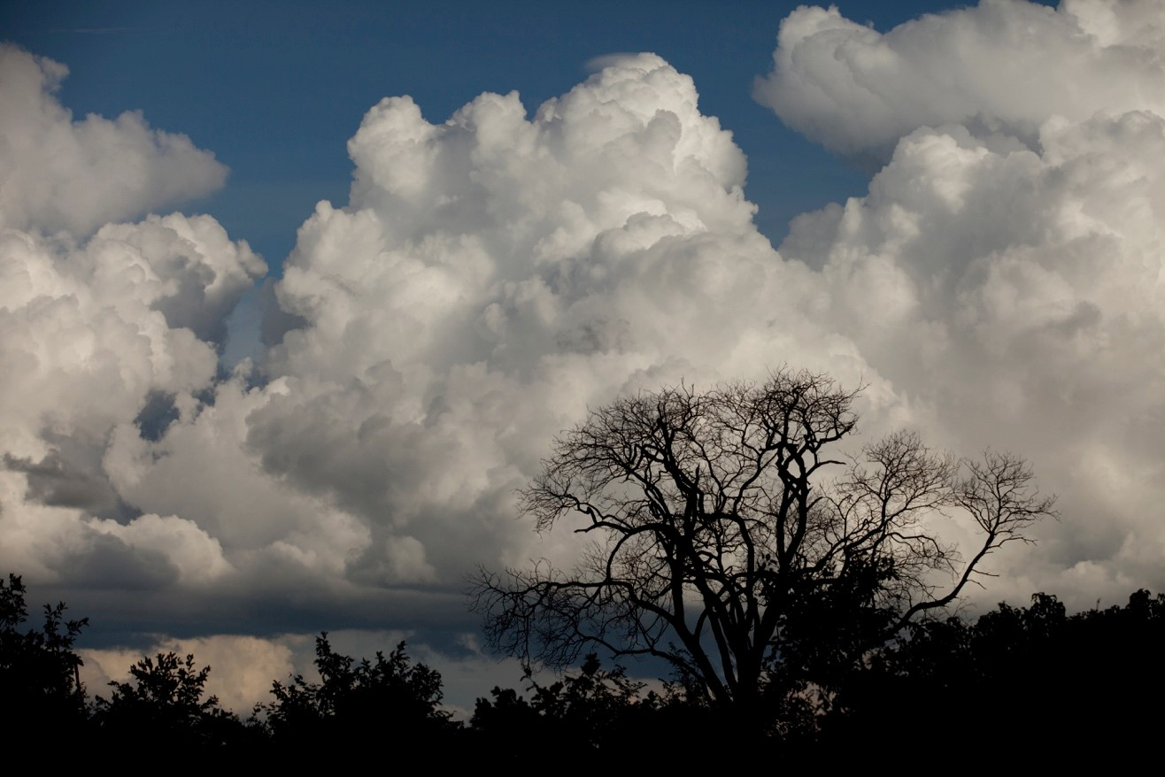 thunder clouds tower over Botswana during the green season