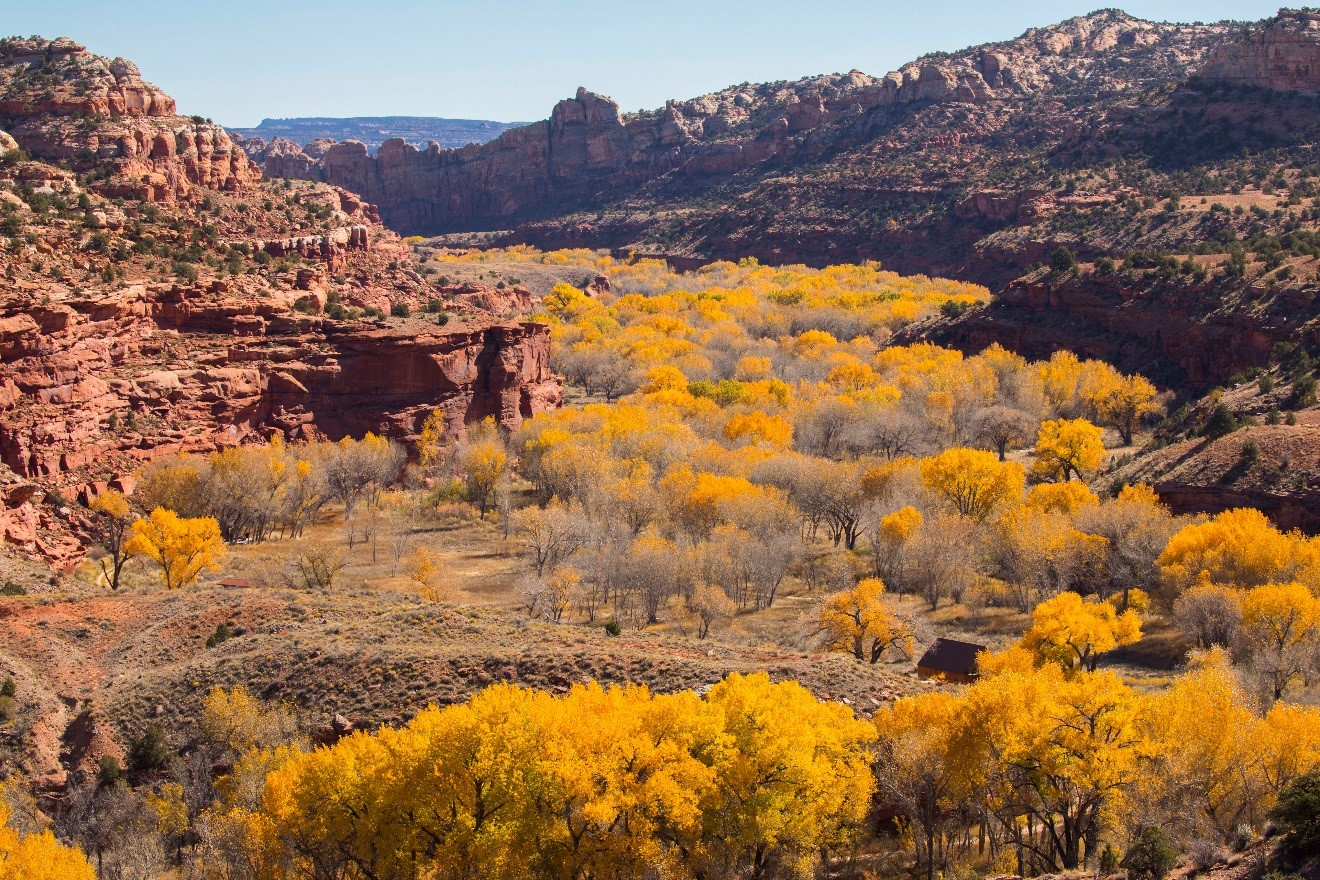 a sweeping view of yellow cottonwood trees along the escalante river in Utah from Kiva Koffee