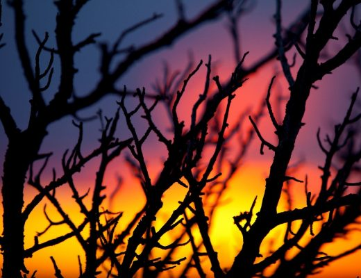 the many colors of a grand canyon sunset with silhouetted twigs in the foreground