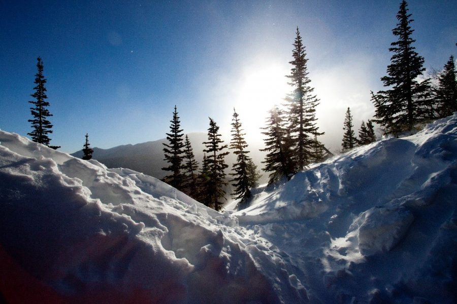 a stunning photo of the sun behind snow and spruce trees in a snowy rocky mountain national park