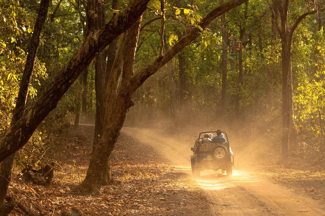 a safari jeep in Kanha national park drives through a sunbeam