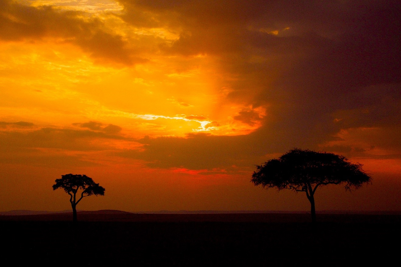 a stunning orange and red sunset over the masai mara in Kenya with two acacia trees silhouetted