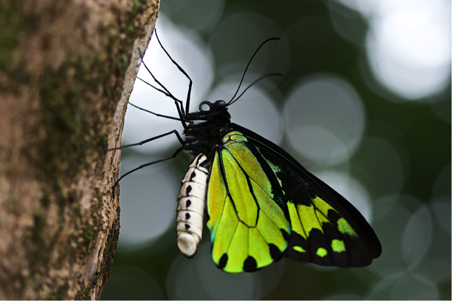 a birding butterfly is framed nicely against blurred background bokeh