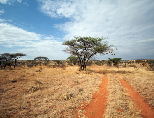 a photo of orange soil where safari vehicles drive in Kenya
