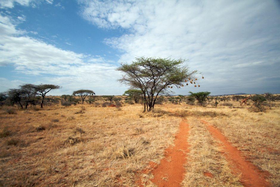 a photo of orange soil where safari vehicles drive in Kenya