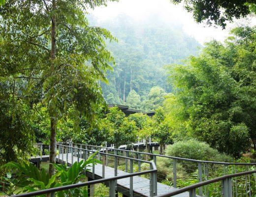 a captivating image of borneo rainforest lodge in danum valley