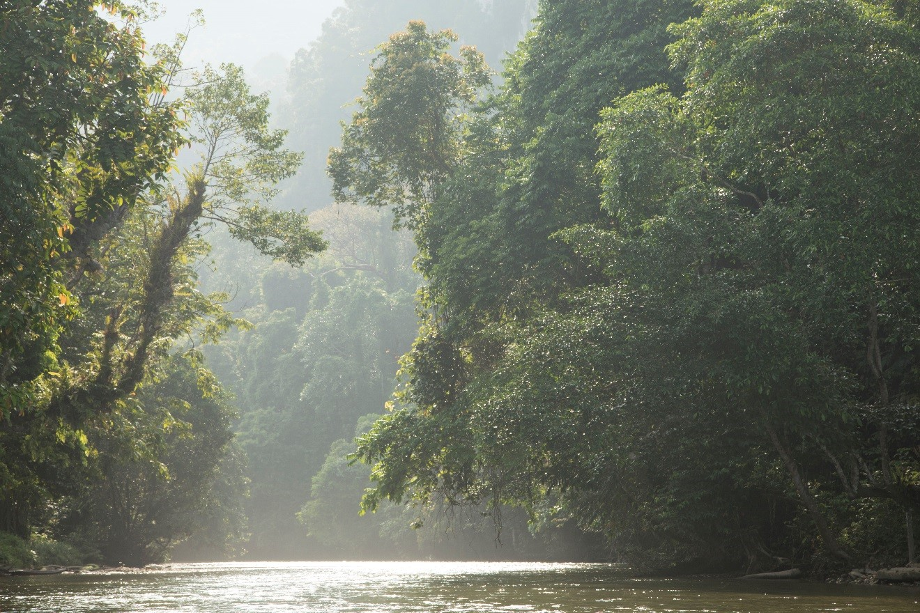 the glow of light on the melinau river of Borneo reflects and illuminates a vivid landscape