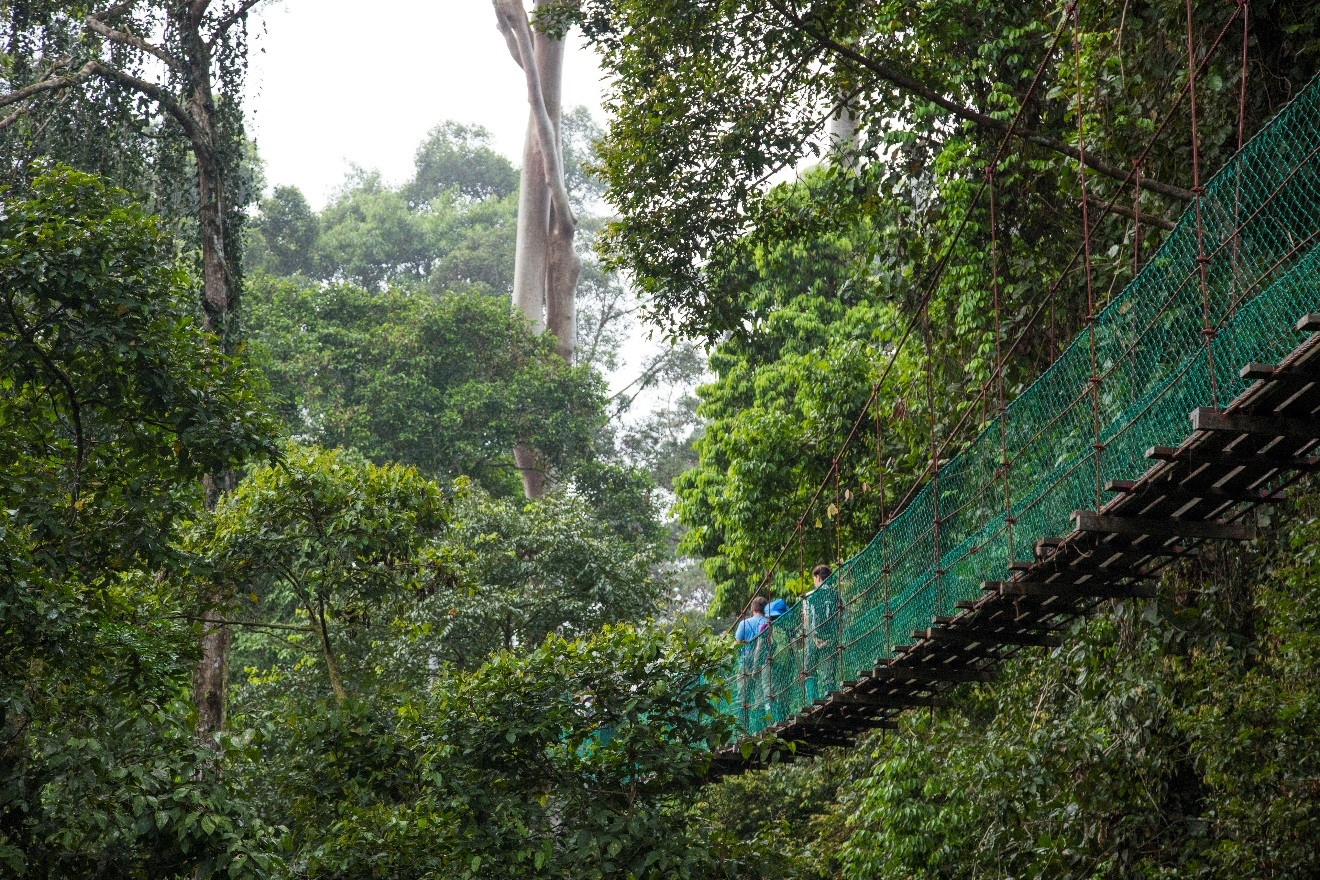 a canopy walkway in Borneo with travelers traversing the skyway
