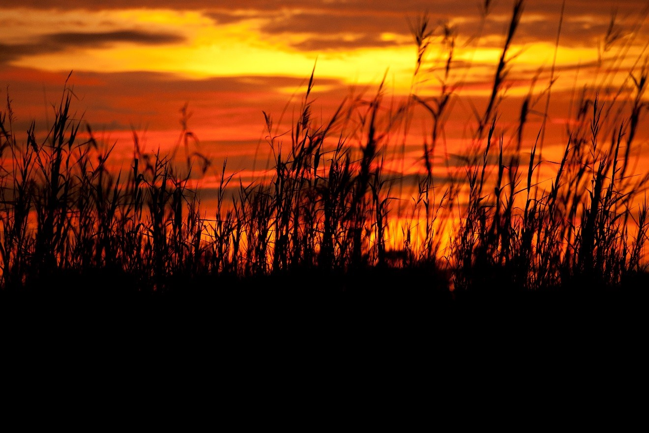 an orange and red sunset is brilliantly colorful over the delta of Botswana's okavango