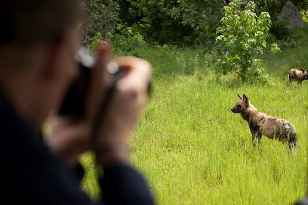 a photographer gets a close look at wild dogs in botswana