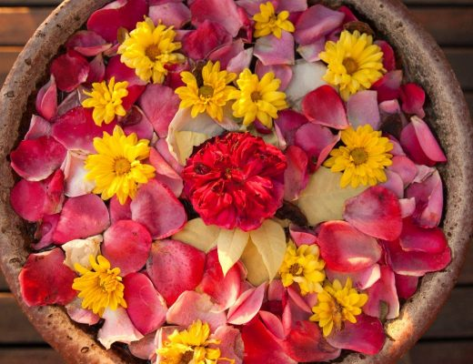 a colorful assemblage of flowers fills a pot outside of a hotel in myanmar