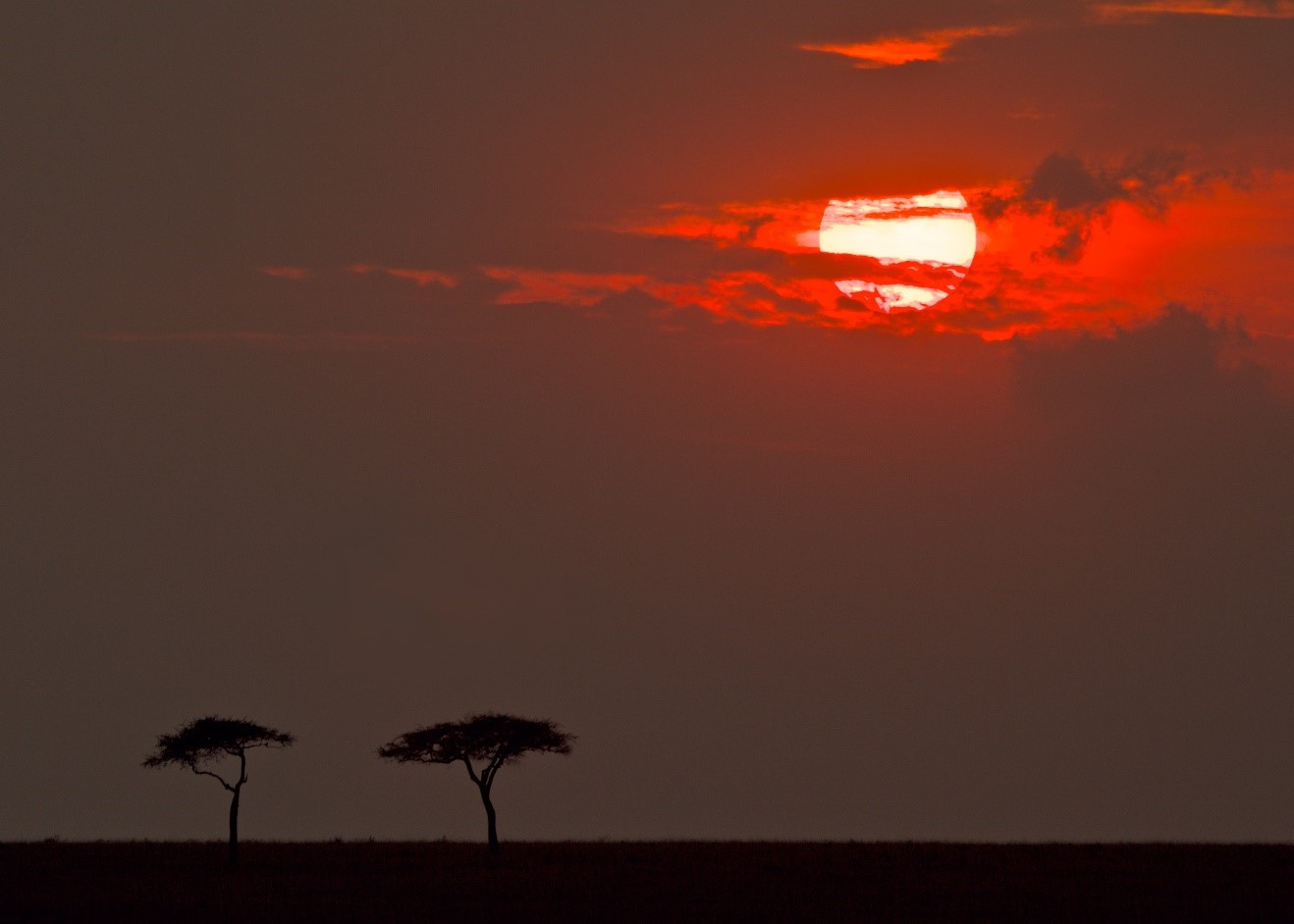 a red sun sets on Kenya's savanna with acacia trees in the foreground