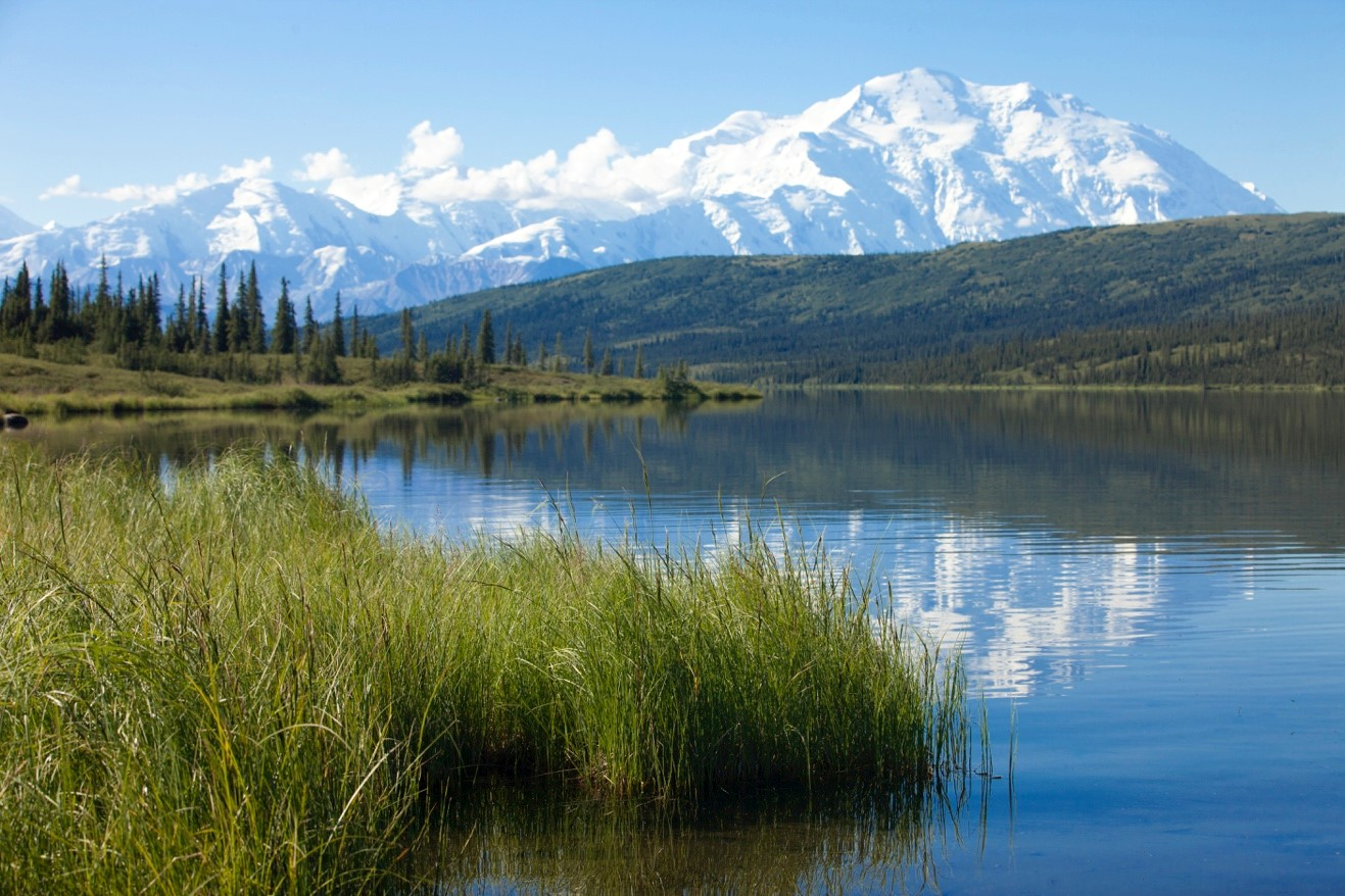 a clear view of mt. denali from reflection pond with grasses in the foreground
