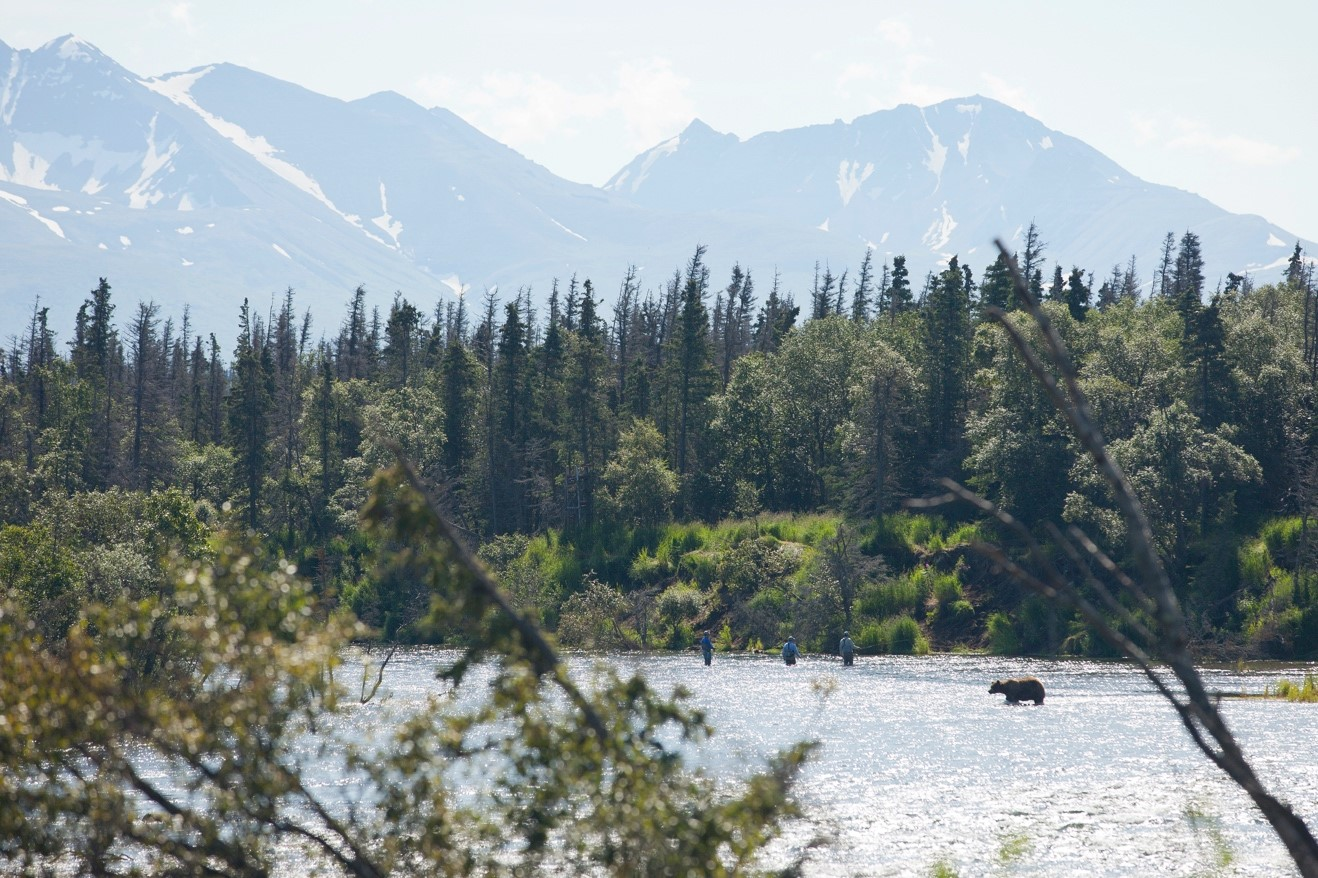 a photo of fishermen next to a brown bear in Katmai National Park