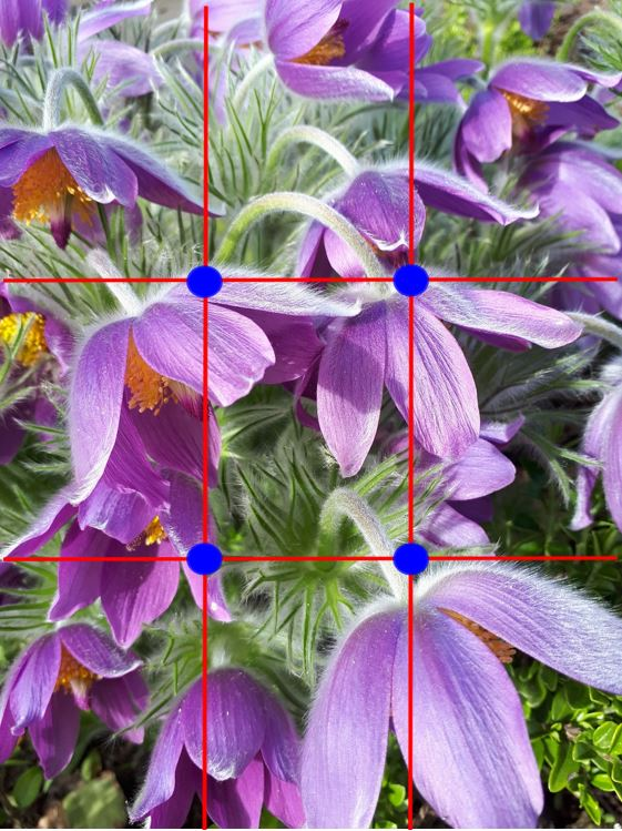 rule of thirds grid over top of a flower photo