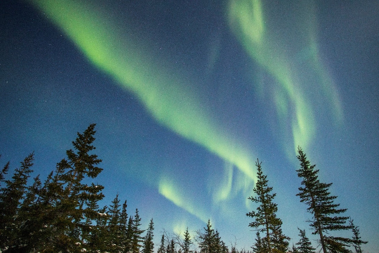 a photo of northern lights swirling over spruce trees in manitoba's tundra