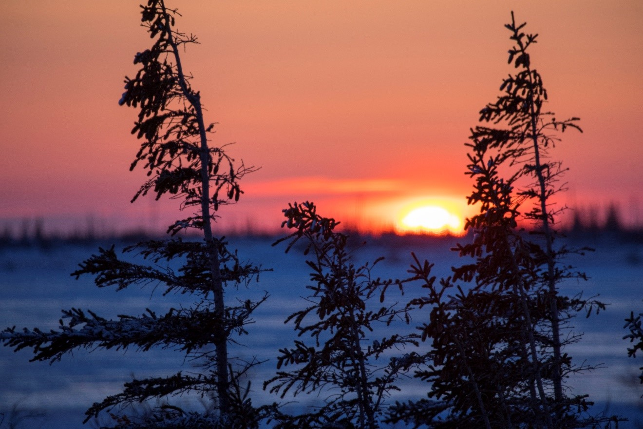 a sun sets behind the horizon in the arctic while spruce trees catch the last glimpse of light