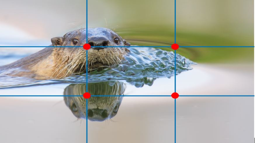 a rule of thirds grid is overlaid on top of a river otter photo to show the great composition