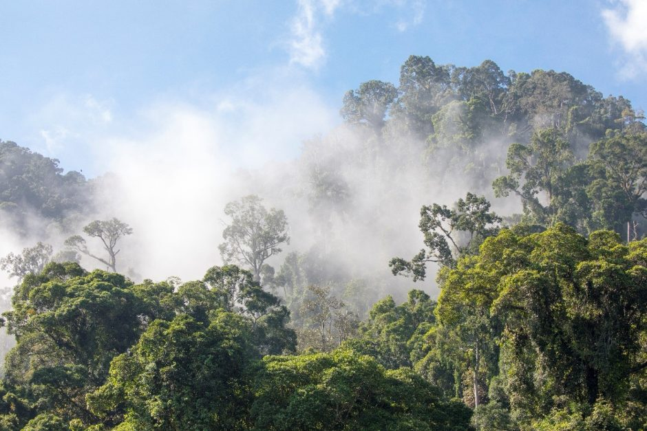 cloud lifts over the rain forest in borneo