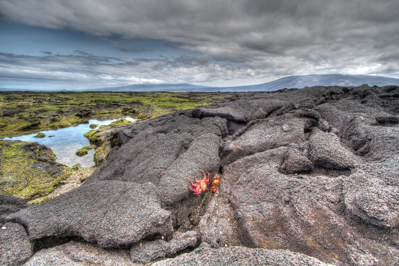 a unique landscape over the lava fields of Galapagos islands