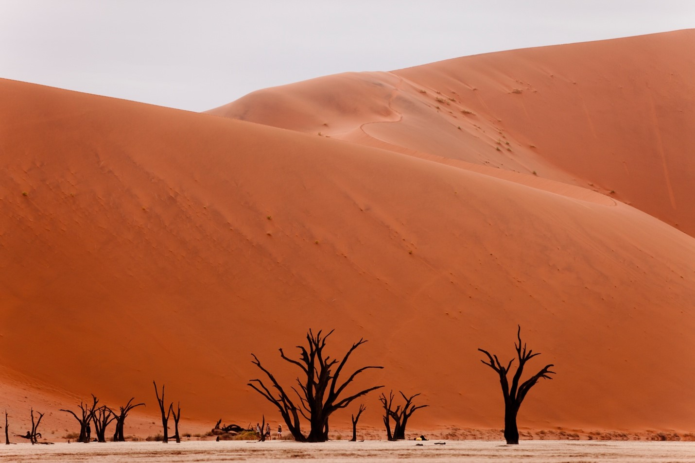 the dunes of sossusvlei tower over trees