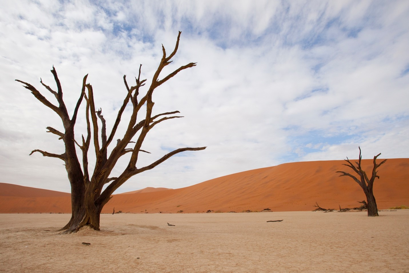 a photograph from the floor of the dead vlei in the namib desert