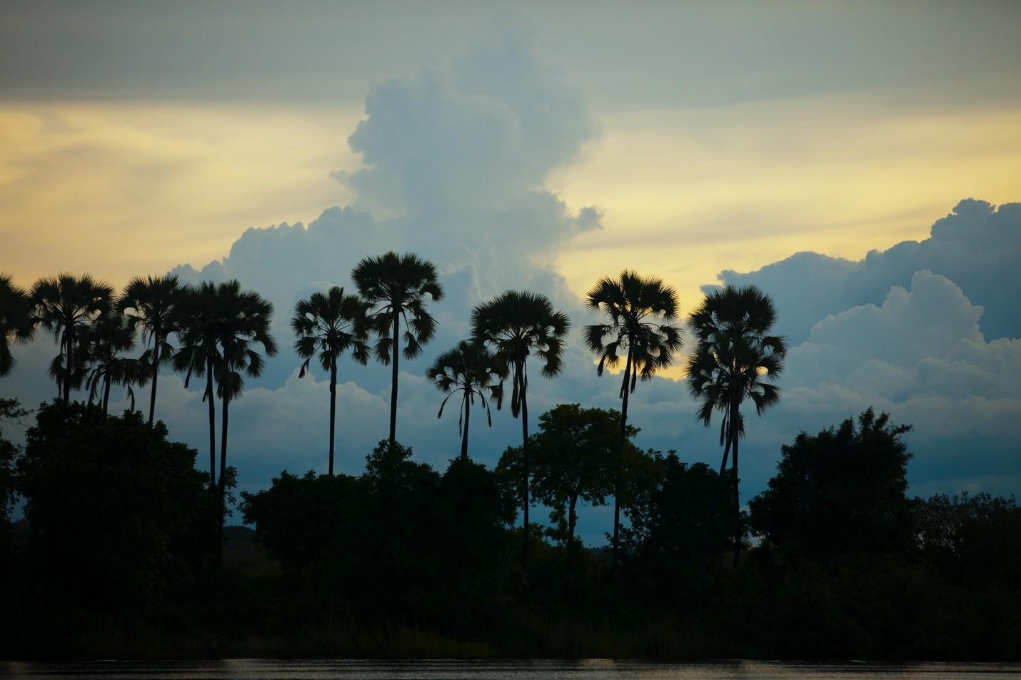 palm trees dot the landscape of the zambezi river