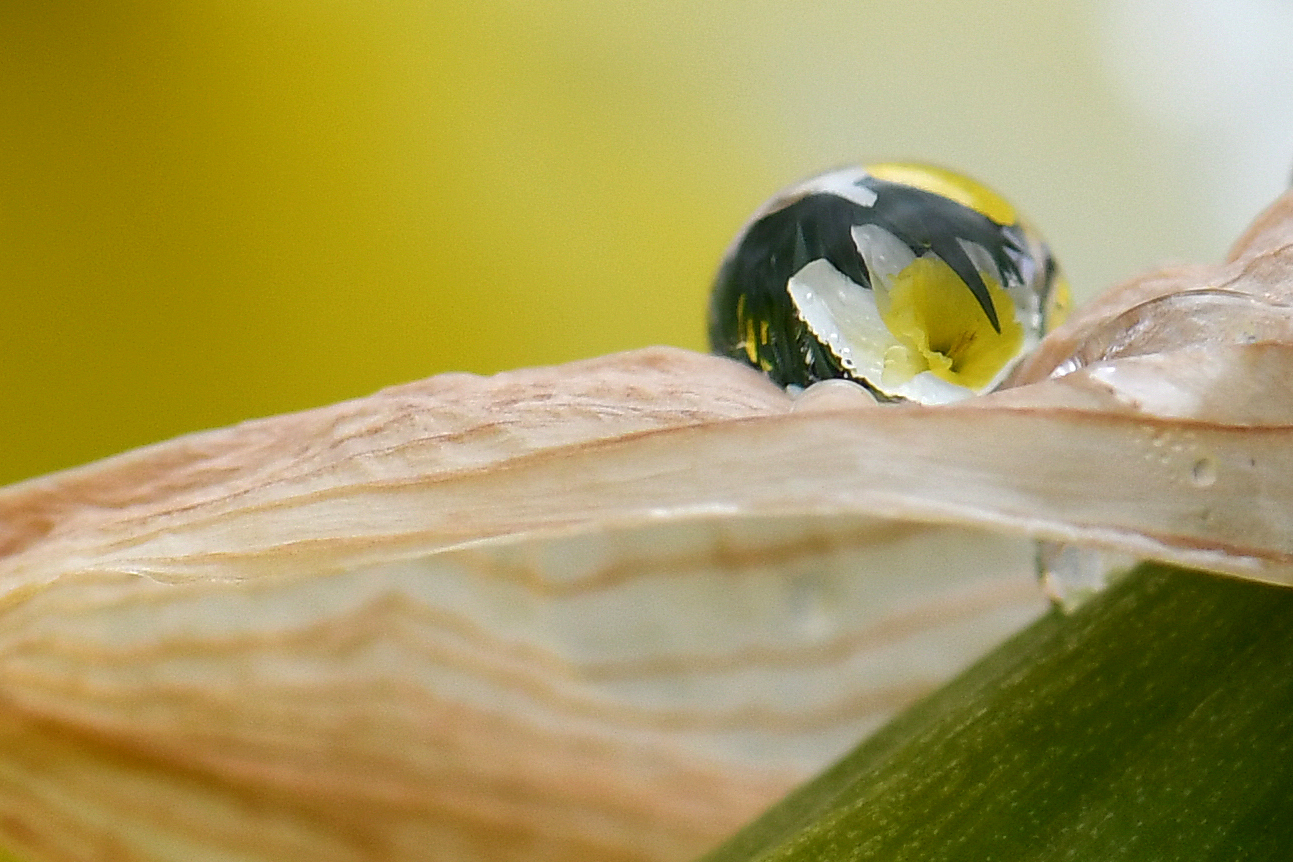 a colorful flower appears in a water droplet