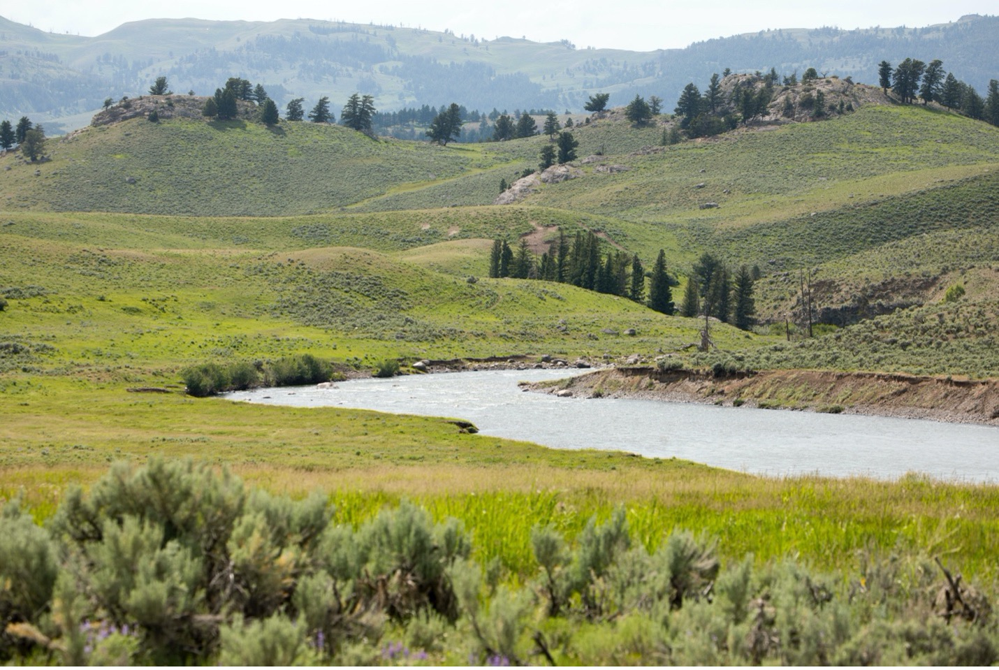 a sweeping landscape view of Lamar Valley in Yellowstone