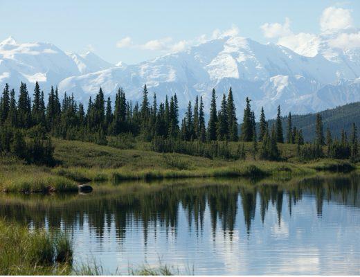 the majestic Denali National Park
