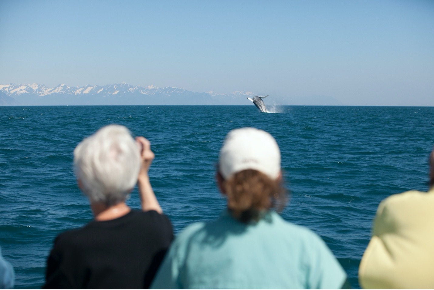people view a breaching humpback whale in Kenai Fjords in Alaska