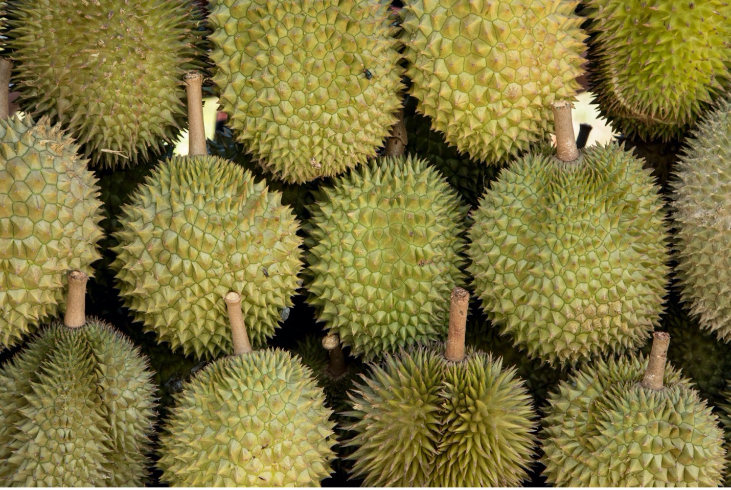 durian fruit is layered in a market in borneo