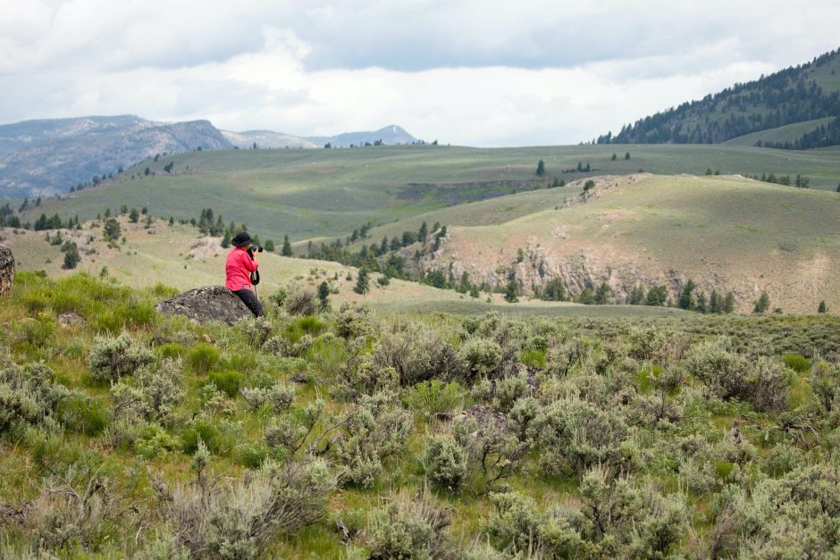 a solo traveler in a red jacket peers into the expanse of the lamar valley in yellowstone national park